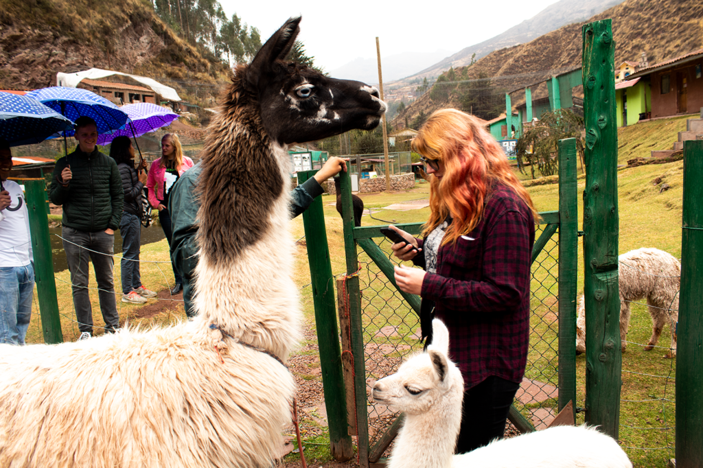 volunteering in cusco cochahuasi
