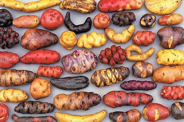 day of the potato peru