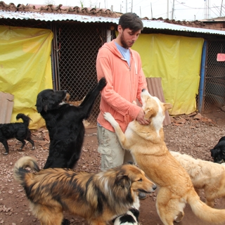Dog shelter project